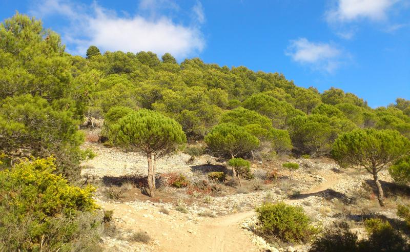 GR 249. Stage 34 Benalmádena - Alhaurín de la Torre. The sandy whites of the ports with the pine forests