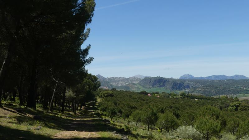 GR 249.5. Section Stage 4. The Betic Mountains of Malaga and Cadiz from the Pinar de la Dehesa