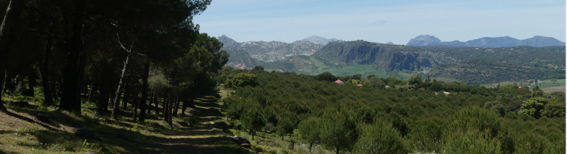 GR 249.5. Section Stage 4. Arriate - Ronda