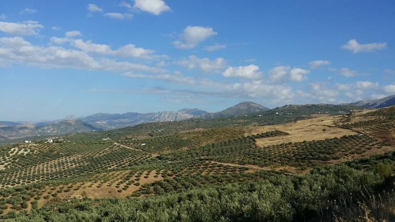 Imagen de GR 249. Stage 08. Canillas de Aceituno - Periana. Olive groves and landscape of stage 8 of the Great Malaga Path before reaching Periana