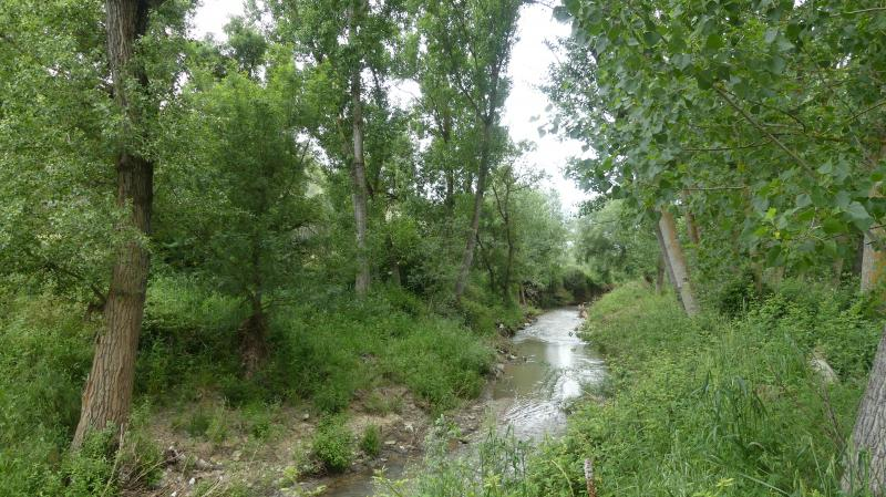 GR 249.4. Section Stage 1. VIllanueva del Rosario - Antequera. The Guadalhorce River with its riverside forest of poplars, elms and poplars