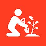 Acceso a Reforestación - Captura CO2